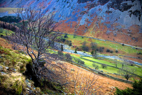 colourful landscape with tree above Glenridding