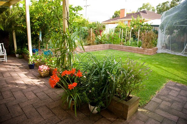 suburban garden in Aspendale where I am sitting typing this