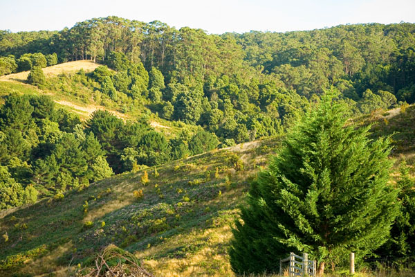 view from Aire valley Guest House over Otway National Park