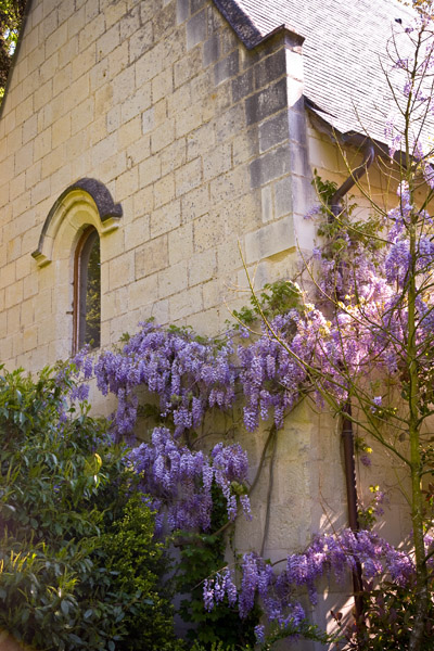 Wisteria on chapel in grounds of Chateau de Tilly France