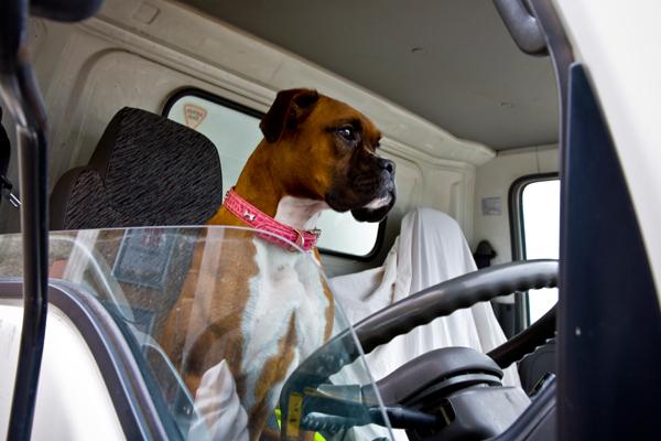 Dog in Irish Truck Cab