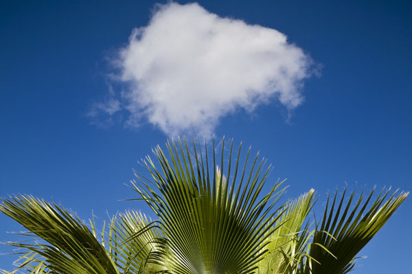 beautiful blue sky with one striking white cloud above palm tree Taba Heights Golf Course