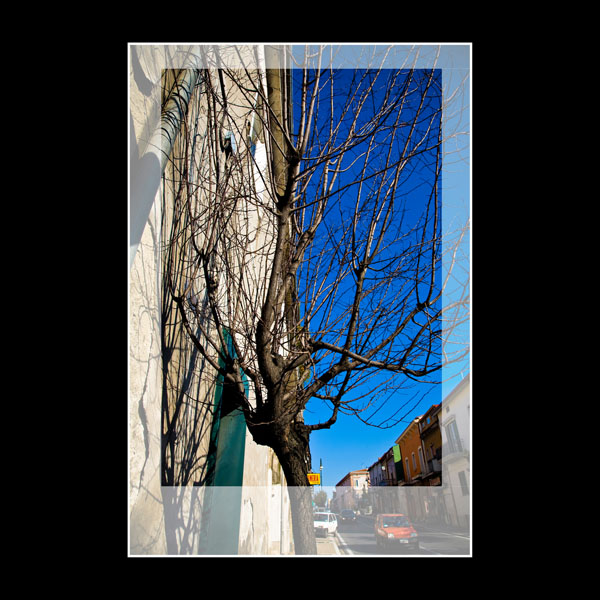 tree with amazing blue sky for a January Winter's day in Arpaia, Italy.