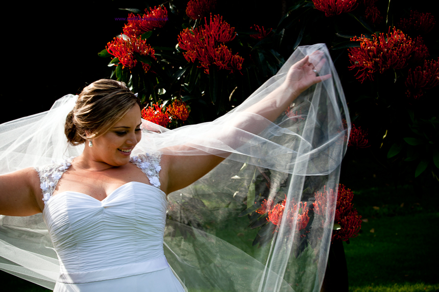 bride and her veil by tree with orange flowers in Sydney