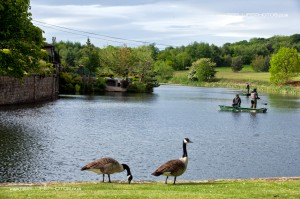 Geese on the lake at Waterton Park Hotel