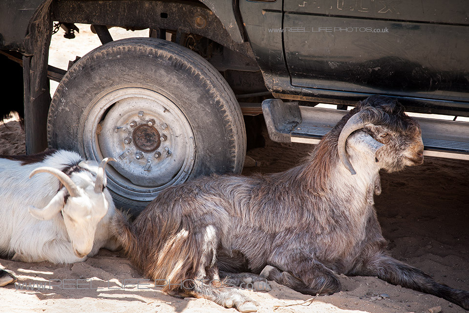 Bedouin0228