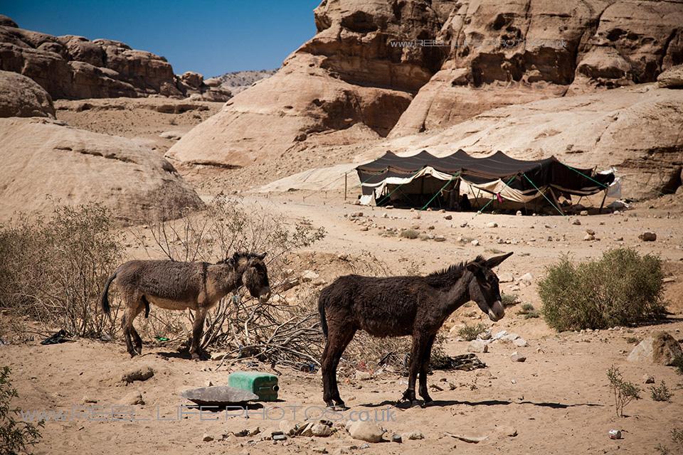 Bedouin0319