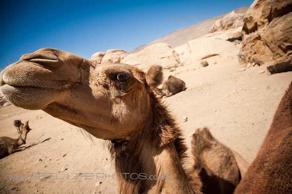 Bedouin0326