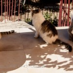 house cats in Greece
