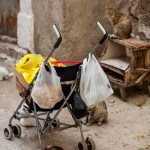 shopping on a buggy and cats after the food