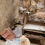 contented Greek cats