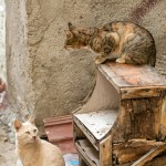 Alley Cats in Chios