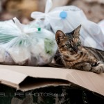cat in rubbish bin