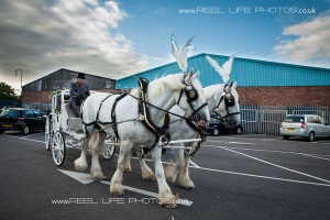 horse-drawn carriage for weddings